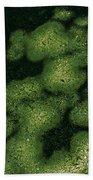 Parrotia Persica Bath Towel
