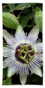 Passion Flower 1 Hand Towel