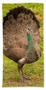 A Peahen's Plumage Hand Towel