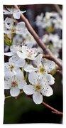 Pear Tree Blossoms IIi Bath Towel