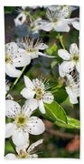 Pear Tree Blossoms Iv Bath Towel