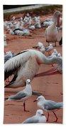 Pelicans At Pearl Beach 3.0 Bath Towel