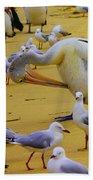 Pelicans At Pearl Beach 3.1 Bath Towel