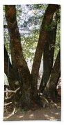 Perfect Picnic Tree Bath Towel