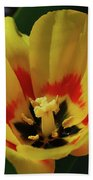 Perfect Yellow And Red Flowering Tulip In A Garden Bath Towel