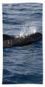 Pilot Whale 6 Bath Towel