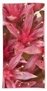 Pink Sedum Flower Macro Bath Towel