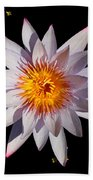 Pink Tipped Water Lily On Black Bath Towel