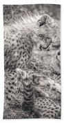 Playtime In Africa- Cheetah Cubs Acinonyx Jubatus Bath Towel
