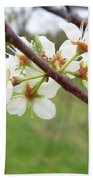 Plum Blossoms In Spring Bath Towel