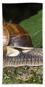 Pneumostome Of A Burgundy Snail Bath Towel