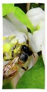 Pollen - Covered - Bee Bath Towel