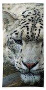 Portrait Of A Snow Leopard Bath Towel