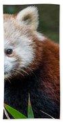 Portrait Of Cini The Red Panda Bath Towel