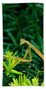 Praying Mantis Bath Towel