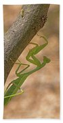 Praying Mantis On The Hunt Bath Towel