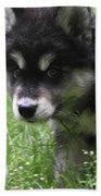Precious Puppy With Lots Of Fluffy Fur  Bath Towel