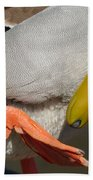 Preening - Santa Cruz, California Bath Towel