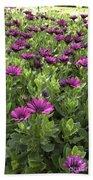 Prescott Park - Portsmouth New Hampshire Osteospermum Flowers Bath Towel