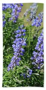 Pretty Blue Flowers Of Silky Lupine Hand Towel
