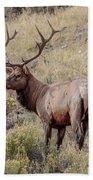 Prize Bull Elk Bath Towel