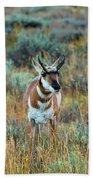Pronghorn Antelope Amid Fall Foliage Wyoming Bath Towel