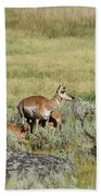 Pronghorn Doe With Her Twins Bath Towel