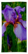Purple Bearded Iris Portrait Bath Towel