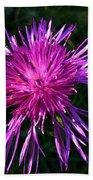 Purple Dandelions 4 Bath Towel
