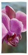 Purple Phalaenopsis Orchid Bath Towel