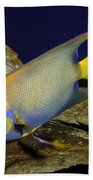 Queen Angelfish Bath Towel