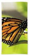Queen Butterfly Bath Towel
