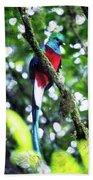 Quetzal In Monteverde Bath Towel