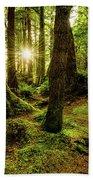 Rainforest Path Hand Towel