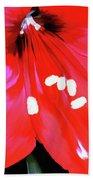 Red Amaryllis Bath Towel
