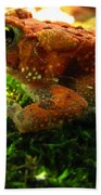 Red American Toad Bath Towel