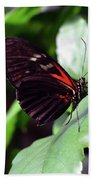 Red And Black Butterfly In The Garden Bath Towel