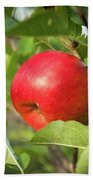 Red Apple On A Tree Hand Towel