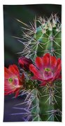 Red Claret Cup Cactus  Bath Towel