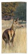 Red Deer 7 Bath Towel