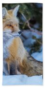 Red Fox At Dawn In Winter Hand Towel