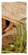 Red Fox Kit Peaking Out From Den Under Old Granary Bath Towel