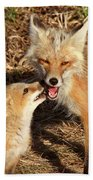 Red Fox Vixen With Pup On Hecla Island In Manitoba Bath Towel
