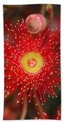 Red Gum Flower Macro Bath Towel