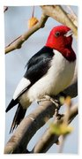 Red-headed Woodpecker At A Glace  Bath Towel