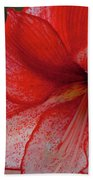 Red Hippeastrum Charisma Bath Towel
