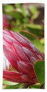 Red King Protea Bud Bath Towel