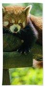 Red Panda Ailurus Fulgens Jerez De La Frontera Spain Bath Towel
