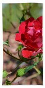 Red Rose And Buds Bath Towel