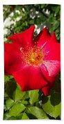 Red Rose In Summer Bath Towel